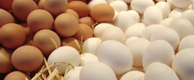 Vijf redenen om een ei te eten