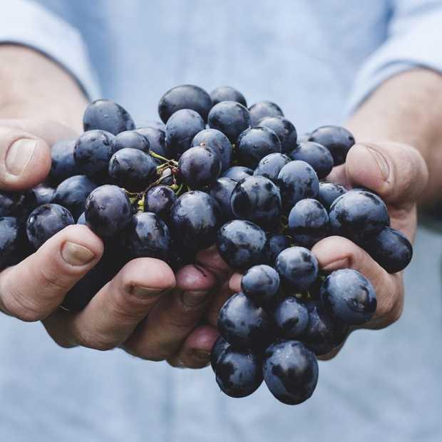 Populariteit biologisch eten groeit fors