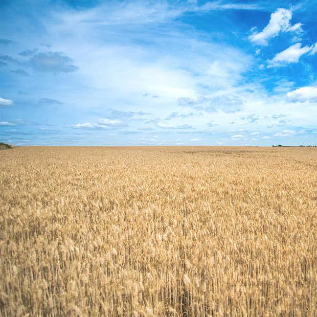 De eerste Food&Agri startup competitie van Europa gaat van start