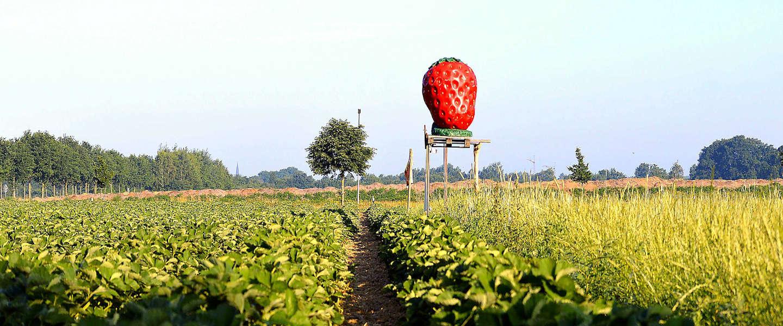 Zomerse aardbeien in de winter? Kan gewoon!