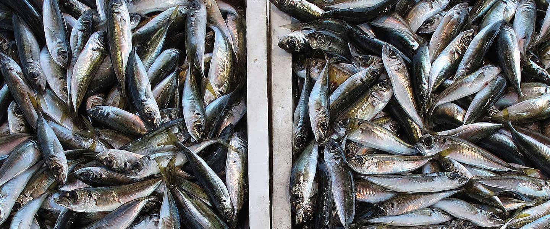 DNA-databank helpt bij het opsporen van visfraude