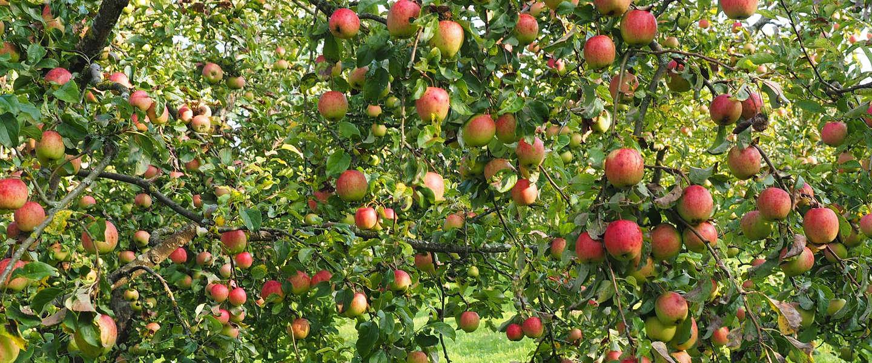 Sommige fruit- en graansoorten hebben 50% van hun voedingswaarde verloren