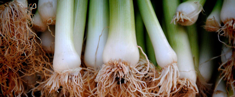Nederland kent 480 lokale voedselgemeenschappen