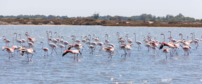 Fleur de Sel van Le Saunier de Camargue: een verhaal over Romeinen en flamingo's