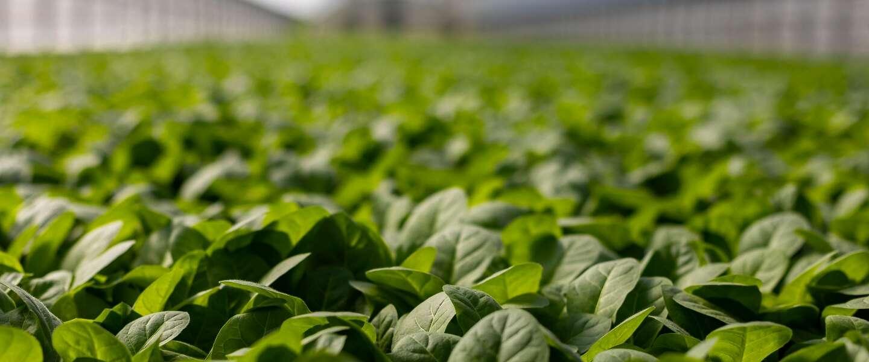 Prijsstijging landbouwgoederen zet door, stijging voedselprijzen dreigt