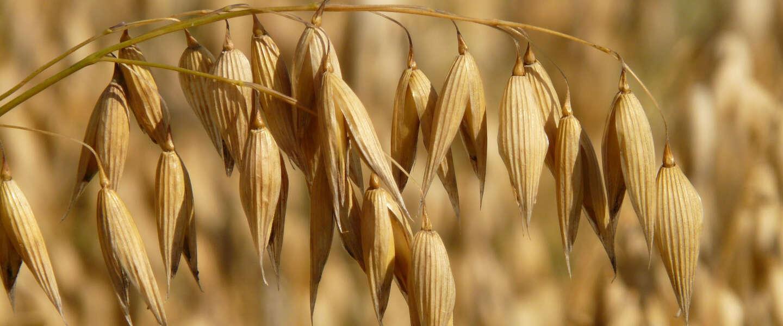 Nairn's lanceert vijf nieuwe glutenvrije producten