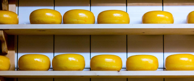 Broeders Abdij Koningshoeven kampen met overschot van 15.000 kilo kaas
