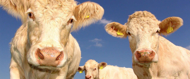 Minister: Geen voortrekkersrol overheid bij ontwikkeling kweekvlees
