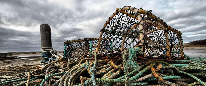 Oosterscheldekreeft landelijk verkocht ter ondersteuning kreeftenvissers
