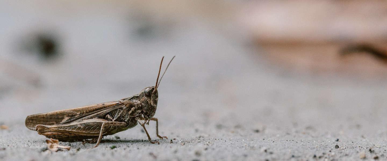 Producten van insecten inmiddels veelal weg uit schappen
