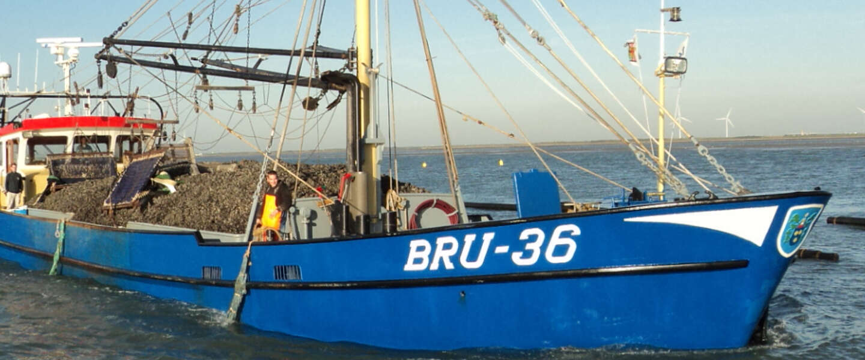 Bruinisse is dé plek in Nederland voor mosselen