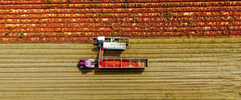 Mutti brengt pesto's gemaakt van Italiaanse tomaten op de Nederlandse markt