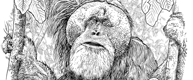 Monkey 47 introduceert zes lege jubileumflessen voor 10-jarig bestaan