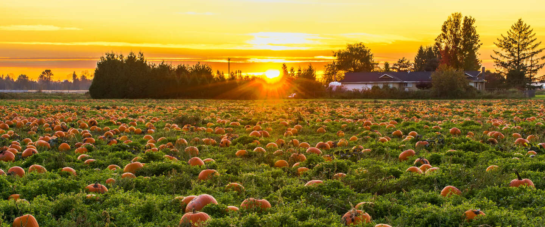 Vier procent meer groenten en fruit gekocht en steeds meer verspakketten