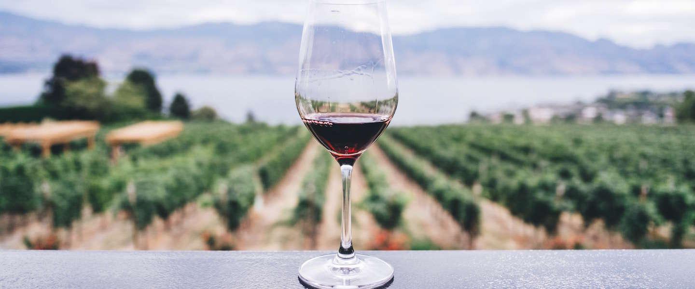 Leg je flesje rode wijn maar in de koelkast!