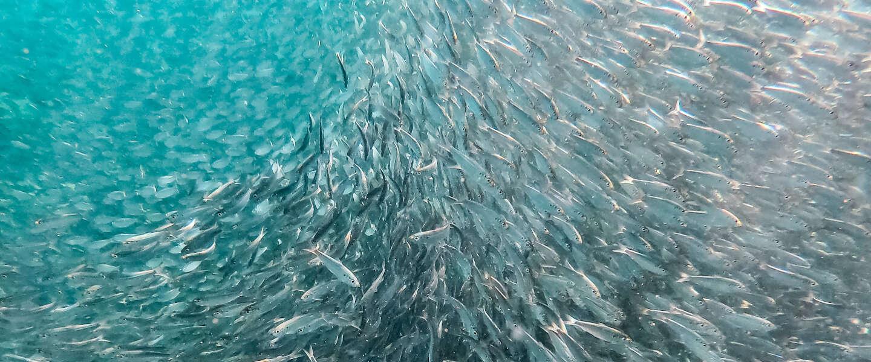 Bewuste Visweek vraagt aandacht voor duurzame vis