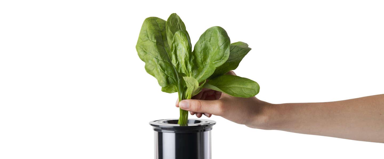 Thuis sapjes en smoothies makenwordt makkelijker met de NutriBullet Juicer Pro