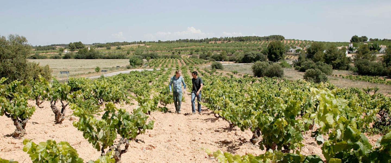 Online wijnproeverij met wijnexpert Thom Muhring van Neleman