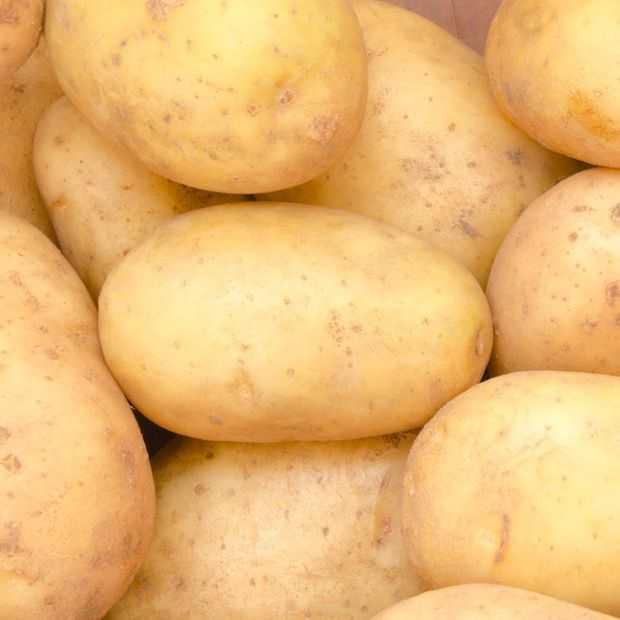 De aardappel in de spotlights