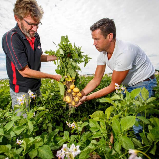 Meer versproducten van Nederlandse bodem bij Albert Heijn in de schappen