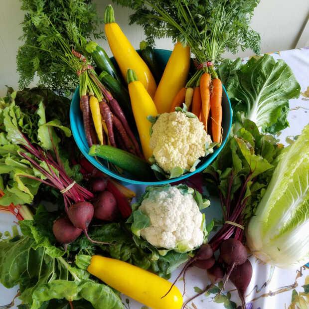 Vegan Fresco: Eerste vegan supermarkt van NL open in januari