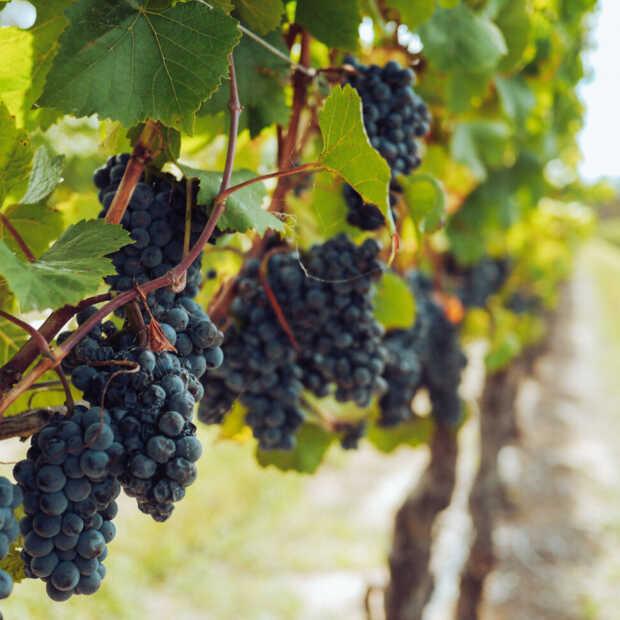Wijnproeverij met wijn uit eigen land: de prachtige wijnen uit Brabant