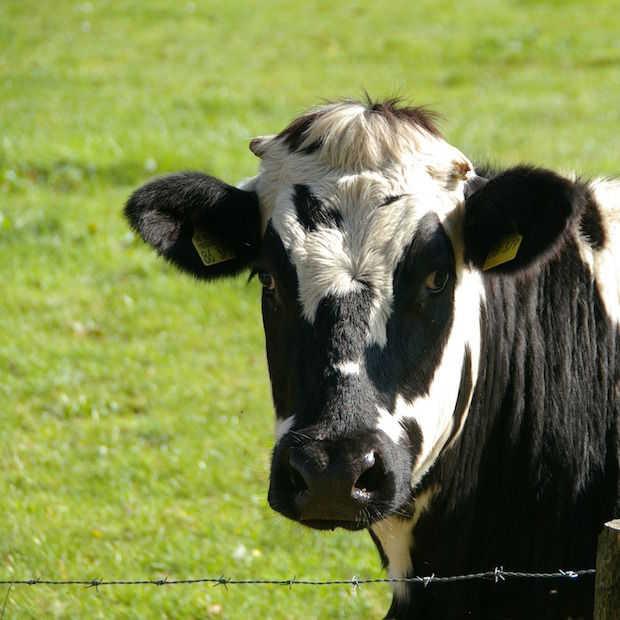 Crowdbutching: samen duurzaam traceerbaar vlees kopen, is big business