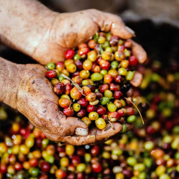 Certificering koffie is pas eerste stap voor duurzame koffieketen