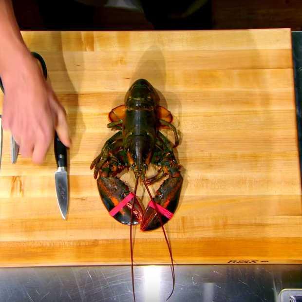 How to: kreeft klaarmaken op de beste manier