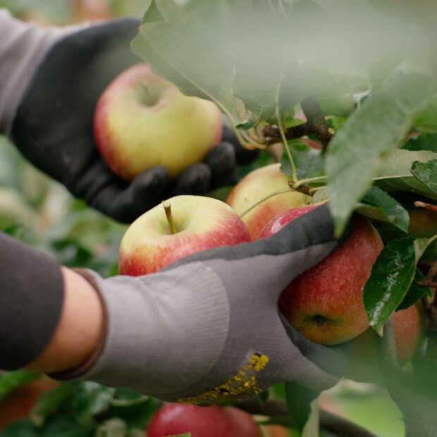 Nieuwe appel Sprank geïntroduceerd in Nederland