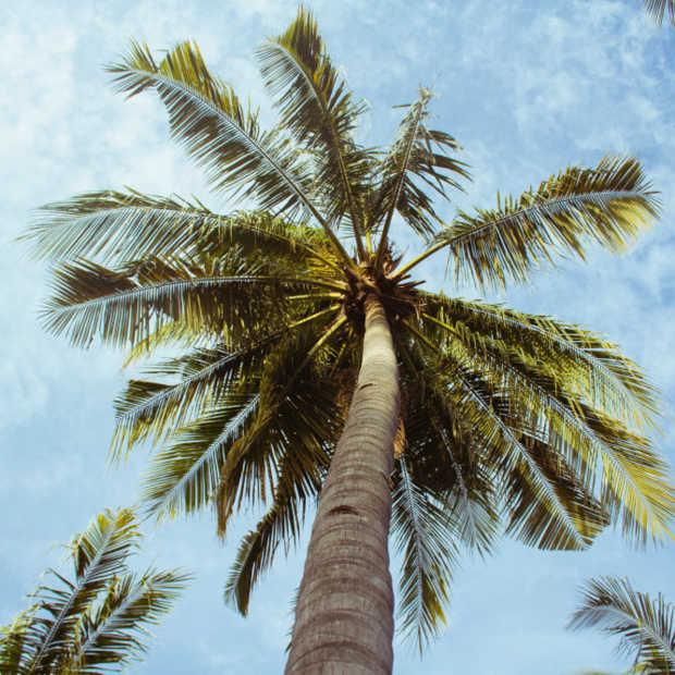 Steeds meer duurzame palmolie verwerkt in Nederland