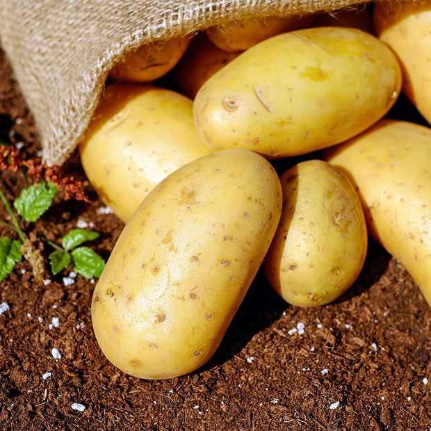 Piepershow: Pop-up restaurant brengt ode aan de aardappel