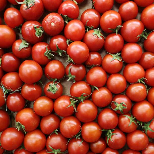 Onderzoek gestart naar de schijnbaar schimmige wereld van ingeblikte tomaten