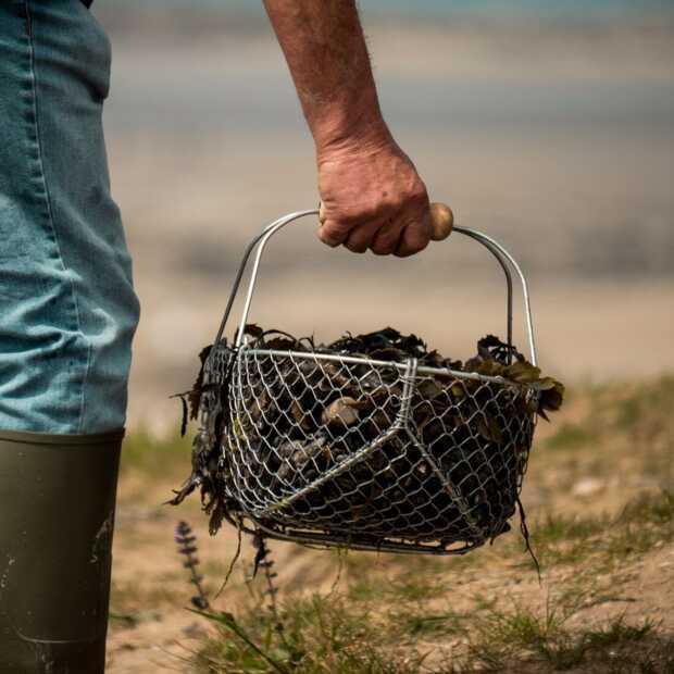 Gefundenes fressen: Zeilen en zelf eten bij elkaar scharrelen in de Zeeuwse Delta