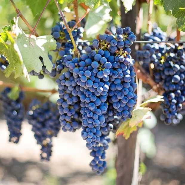 Inwoners Den Bosch relatief gezien de grootste wijndrinkers