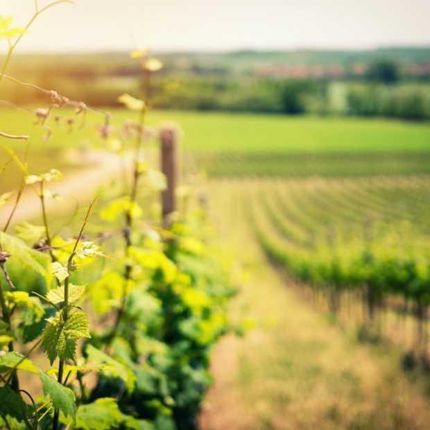 Wijnen uit Ambt Delden krijgen Europese beschermde oorsprongsbenaming