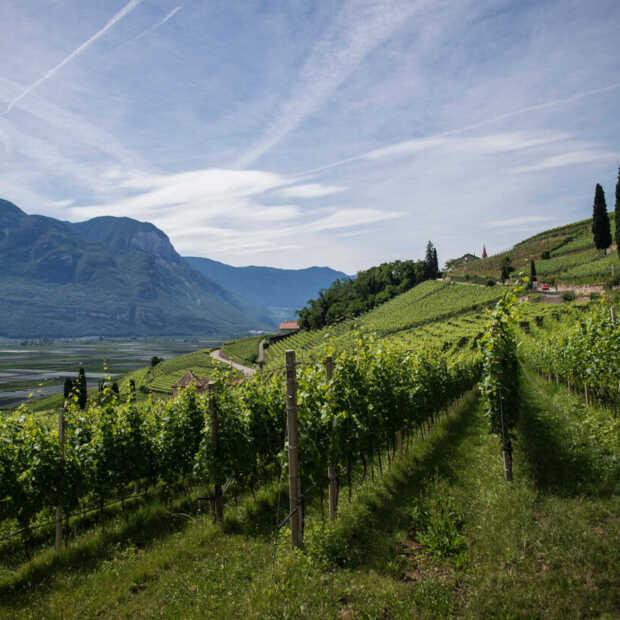 Wijntip voor kerst: wijnen uit het Italiaanse Zuid-Tirol